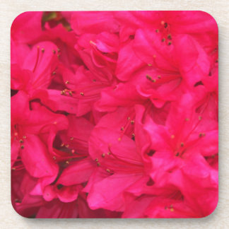 Hot Pink Azalea Flowers Drink Coaster