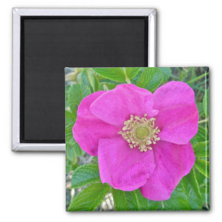 Hot Pink Beach Rose Coordinating Items Square Magnet