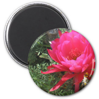 Hot Pink Blooming Cactus Flower 6 Cm Round Magnet