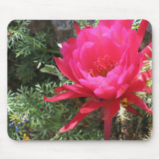 Hot Pink Blooming Cactus Flower Mousepad