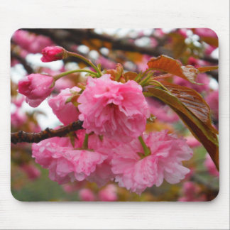 Hot Pink Cherry Blossom Flowers Mousepads