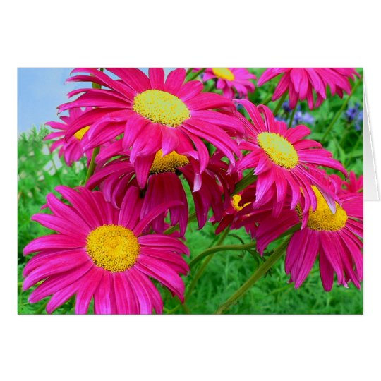 Hot Pink Daisies Card
