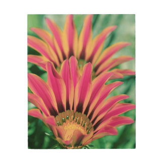 Hot Pink Daisy Wood Wall Art