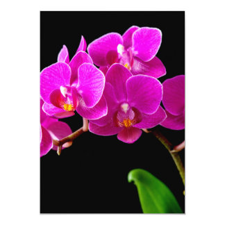 Hot Pink Dendrobium Orchid Flower Orchids Template 13 Cm X 18 Cm Invitation Card