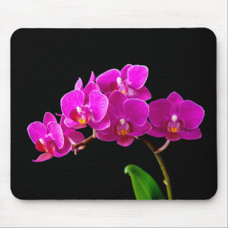 Hot Pink Dendrobium Orchid Flower Orchids Template Mouse Mat