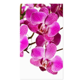 Hot Pink Dendrobium Orchid - Orchids Background Pack Of Standard Business Cards