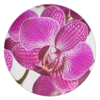 Hot Pink Dendrobium Orchid - Orchids Background Plate