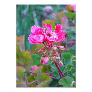 Hot pink flowers beautiful colorful garden photo 13 cm x 18 cm invitation card
