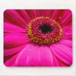 hot pink gerber daisy mouse pad