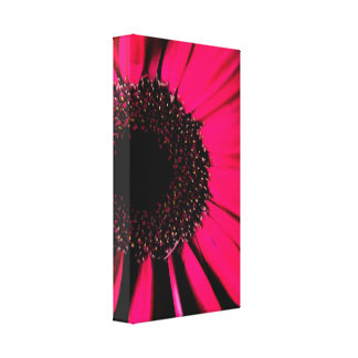 Hot Pink Gerber Daisy Wrapped Canvas Print