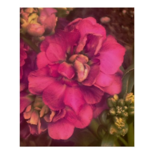 hot pink passion print