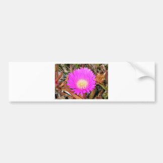 Hot pink Pigface flower in bloom 2 Bumper Sticker