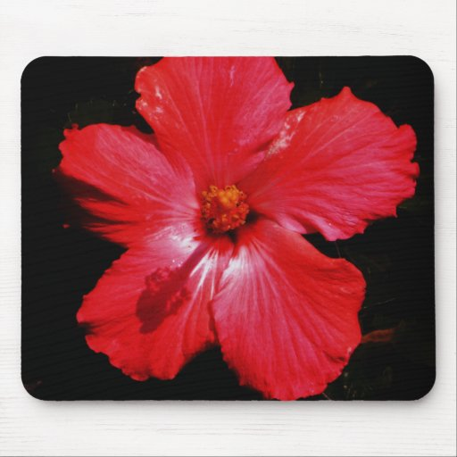 Hot Pink Red Hibiscus flower on Black Mousepad