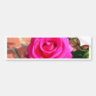 Hot Pink Rose Bumper Sticker