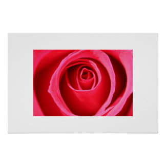 Hot Pink Rose Poster