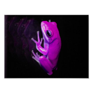 Hot Pink Tree Frog Posters