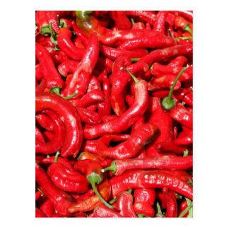 Hot Red Chili Peppers Outdoors in the Summer Sun Postcard