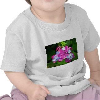 Hot Spring Tshirts
