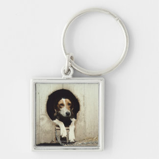 Hound dog in dog house key ring