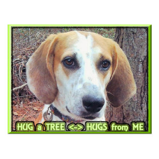 Hound Dog Tree Hugger Post Cards