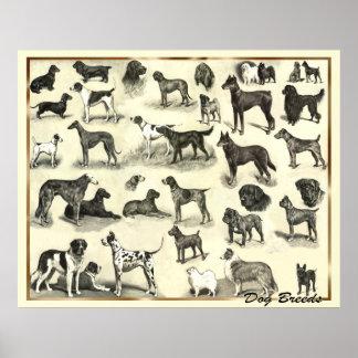 Hounds - Dog Breeds - Hunds Print Dogs
