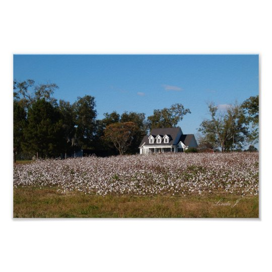 House and Cotton Field Canvas Print