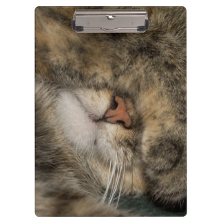 House cat covering eyes while sleeping clipboards