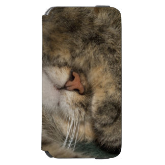 House cat covering eyes while sleeping incipio watson™ iPhone 6 wallet case