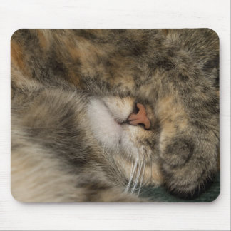 House cat covering eyes while sleeping mouse pad