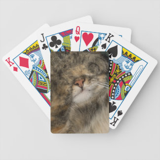 House cat covering eyes while sleeping poker deck