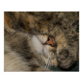 House cat covering eyes while sleeping print