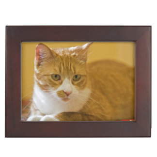 House cat keepsake box