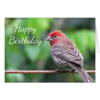 House finch card