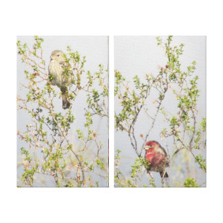 House Finch Couple Canvas Prints