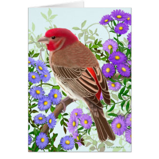 House Finch in Wildflowers Greeting Card