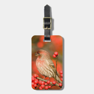House Finch on Common Winterberry Luggage Tags
