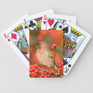 House Finch on Common Winterberry Poker Deck