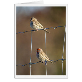 House Finches Card