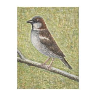 House Sparrow 2008 Canvas Print