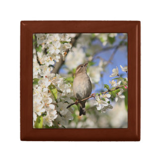 House sparrow and spring blossoms gift box