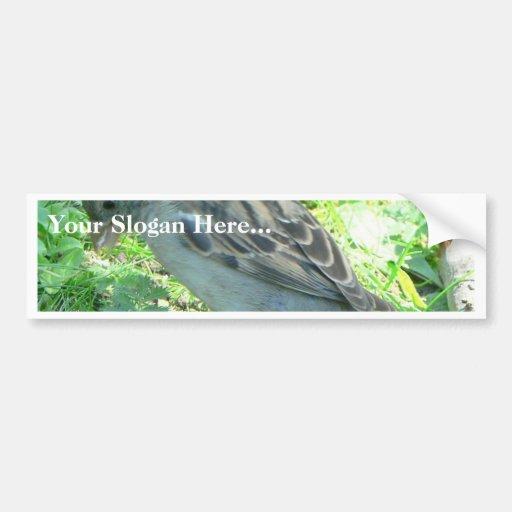 House Sparrow Bumper Sticker