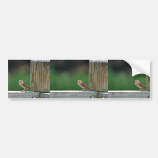 House sparrow bumper stickers