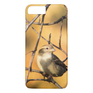 House Sparrow In Defiance, Ohio, USA iPhone 8 Plus/7 Plus Case