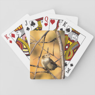 House Sparrow In Defiance, Ohio, USA Playing Cards