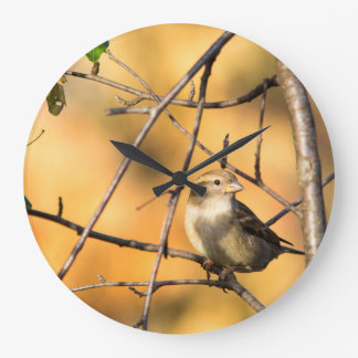 House Sparrow In Defiance, Ohio, USA Wallclocks