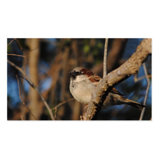 House Sparrow Pack Of Standard Business Cards