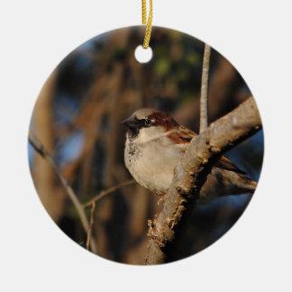 House Sparrow Round Ceramic Decoration