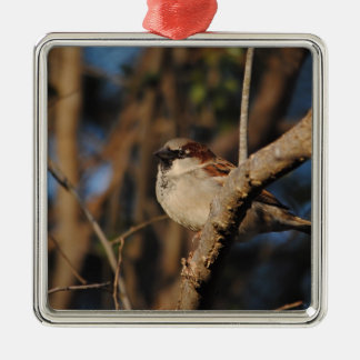House Sparrow Silver-Colored Square Decoration