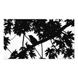 House Wren Silhouette Love Bird Watching Art Photo