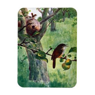 House Wrens Nesting in an Apple Tree Rectangular Photo Magnet